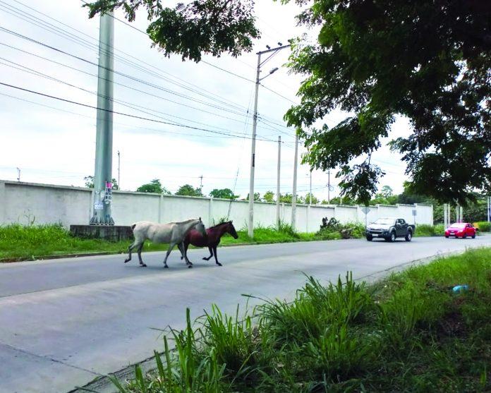 Precaución y peligro con equinos