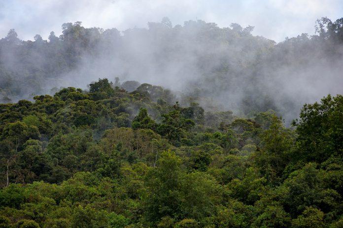 TRABAJO. Se monitoreó 119 parcelas de bosque situados entre la cordillera andina y la cuenca amazónica.