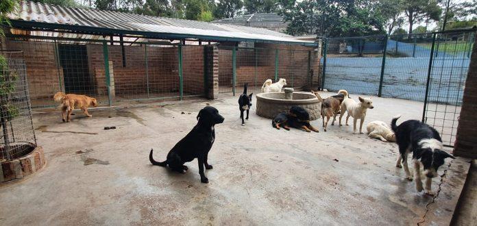 Centro de adopción de Protección Animal Ecuador en Alangasí.