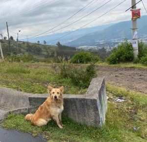Perro callejero, vía Conocoto - Foto Ricardo Miranda