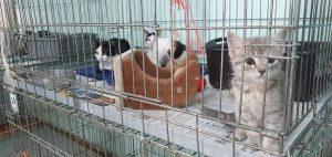 Gatos en adopción Protección Animal Ecuador sede Antonio de Ulloa.