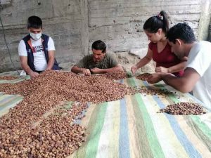 PRODUCCIÓN. El café y el cacao se dan en la zona rural, las familias los cultivan.