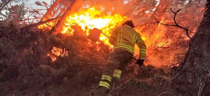 Acciones para evitar la pérdida de bosques lideradas por la UNL