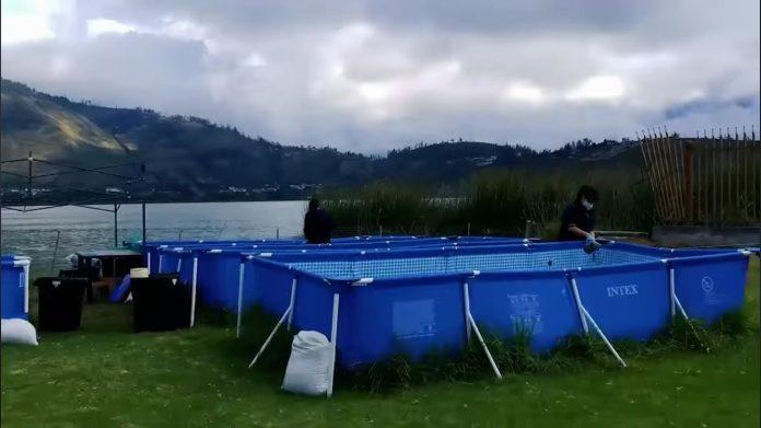 Sistema. Los jardines flotantes funcionan con una planta acuática que limita la formación de bacterias en el espejo de agua.