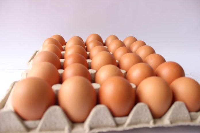Tungurahua es una de las provincias a nivel nacional con más granjas avícolas.