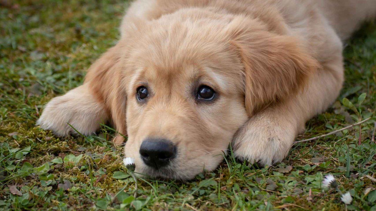 La campaña permanente de adopción busca dar más hogares a las mascotas rescatadas por el albergue.